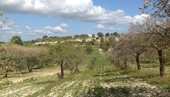 Noto (SR), 96017, ,Villas and Olive Grove,For Sale,1008